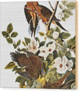 Audubon Dove Wood Print