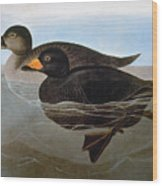 Audubon: Duck, 1827 Wood Print