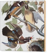 Audubon: Duck Wood Print