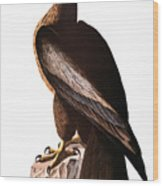Audubon: Eagle Wood Print