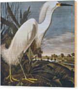 Audubon: Egret Wood Print