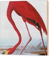 Audubon: Flamingo, 1827 Wood Print