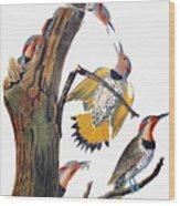 Audubon: Flicker Wood Print