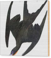 Audubon: Frigatebird Wood Print