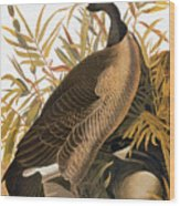 Audubon: Goose Wood Print