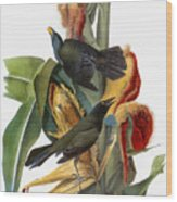 Audubon: Grackle Wood Print