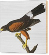 Audubon: Hawk, 1827 Wood Print
