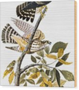 Audubon: Hawk Wood Print