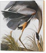 Audubon Heron Wood Print