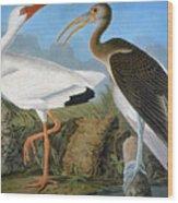 Audubon: Ibis Wood Print