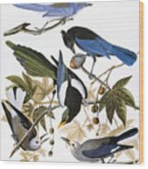 Audubon: Jay And Magpie Wood Print
