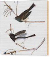 Audubon: Junco, (1827) Wood Print