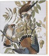 Audubon: Kestrel, 1827 Wood Print
