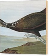 Audubon: Limpkin Wood Print