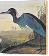 Audubon: Little Blue Heron Wood Print by Granger