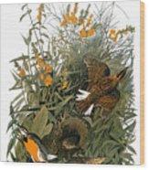 Audubon: Meadowlark Wood Print