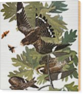 Audubon: Nighthawk Wood Print