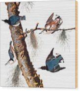 Audubon: Nuthatch Wood Print