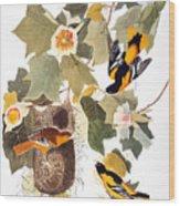 Audubon: Oriole Wood Print