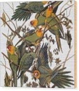 Audubon: Parakeet Wood Print
