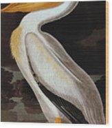 Audubon: Pelican Wood Print