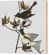 Audubon: Phoebe Wood Print