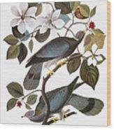 Audubon: Pigeon Wood Print