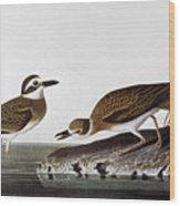 Audubon: Plover, 1827-38 Wood Print