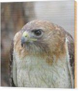Audubon Quality Wood Print