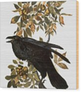 Audubon: Raven Wood Print
