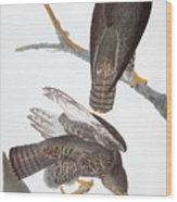 Audubon: Red-tailed Hawk Wood Print