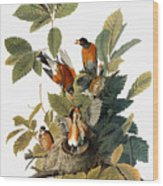 Audubon: Robin Wood Print
