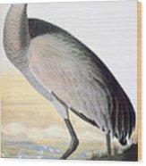 Audubon Sandhill Crane Wood Print