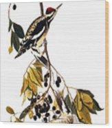 Audubon Sapsucker, 1827-38 Wood Print