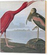 Audubon: Scarlet Ibis Wood Print