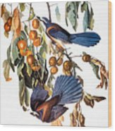 Audubon: Scrub Jay, 1827-38 Wood Print