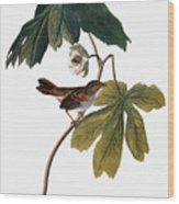 Audubon: Sparrow, 1827-38 Wood Print
