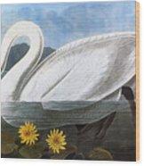 Audubon: Swan, 1827 Wood Print
