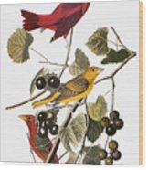 Audubon: Tanager Wood Print