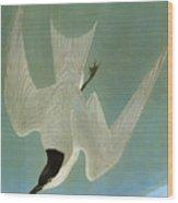 Audubon: Tern Wood Print