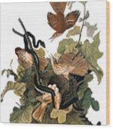 Audubon: Thrasher Wood Print