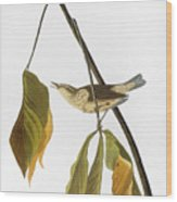 Audubon: Thrush, 1827 Wood Print