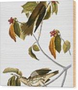 Audubon: Thrush Wood Print