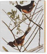 Audubon: Towhee Wood Print