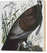 Audubon: Turkey Wood Print