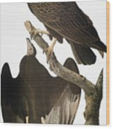 Audubon: Turkey Vulture Wood Print