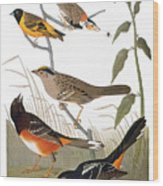 Audubon: Various Birds Wood Print