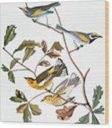 Audubon: Warbler, (1827-1838) Wood Print