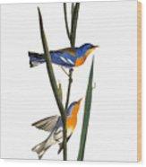 Audubon: Warbler, 1827 Wood Print