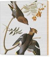 Audubon: Waxwing Wood Print
